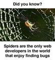 Spider are web developers who enjoy finding bugs