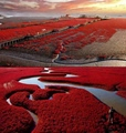 Red Beach - Panjin China