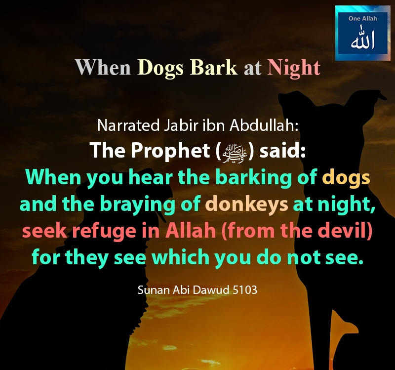 When dogs bark and the braying of donkeys at night - Seek refuge in Allah from devil - Sunah Abi Dawood - 5103